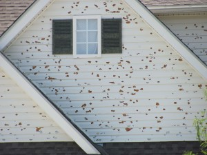 Damaged Exterior Siding
